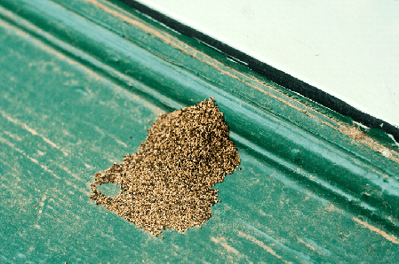 Drywood Termite Fecal Pellets