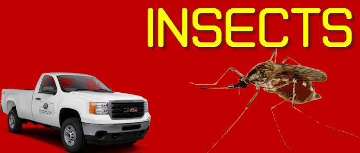 insects control Brownsville texas